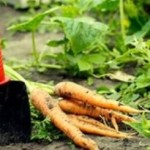 orto-coltivare-come